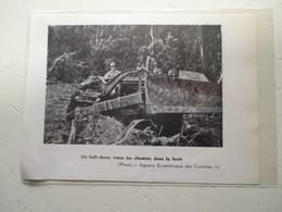 CAMEROUN - Tracteur Bulldozer  Colonial Forestier - Coupure De Presse De 1953 - Tracteurs