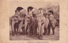 LAOS - Eléphants Du Plateau Des Bolovens Partie De Vientiane En 1937 Indochine Asie Elephant - Laos