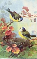 C. Klein  -  Chromo-Litho Card Of Birds : A Couple Of Blue Tits & Their Nest On A Fruit Bush. - Klein, Catharina