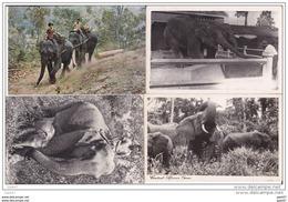 4 Cpa     Réf-JP--V-v-232    ( Les ELEPHANTS  ) - Elefanten