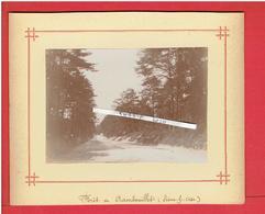 PHOTOGRAPHIE VERS 1890 FORET DE RAMBOUILLET YVELINES - Luoghi