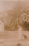 Photo 1903 Fort Djeniene Bourezg Algérie Légion Etrangère Légionnaire Dans Le Jardin - Guerra, Militari