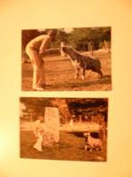 Lot De 2 Cartes Postales / Animaux / Zoo De Doué Mr Gay Et Ses Hyenes - Tierwelt & Fauna