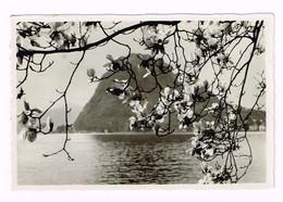 V5077 Lugano - Monte San Salvatore - Sinfonia Di Fiori Sul Lago - Panorama / Viaggiata 1941 - TI Tessin
