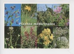 Plantes Médicinales : Consoude, Arnica, Ortie Dioïque, Mauve, Bourse-pasteur, Millepertuis, Valériane - Medicinal Plants