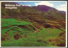 °°° 20506 - PHILIPPINES - MALICONG RICE TERRACES °°° - Filippine
