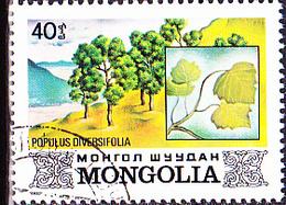 Mongolei - Pappel (Populus Diversifolia) (MiNr: 1460) 1982 - Gest Used Obl - Mongolia