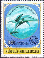 Mongolei - Blauwal (Balaenoptera Musculus) (MiNr: 1337) 1980 - Gest Used Obl - Mongolia