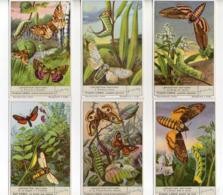 FIGURINE LIEBIG - 1950 - Lepidotteri Notturni - Serie Completa Nr. 1497 (Sanguinetti) - Lingua Italiana - (FDC20921) - Liebig