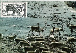 Carte Maximum 1987 Kerguelen - Tierras Australes Y Antárticas Francesas (TAAF)