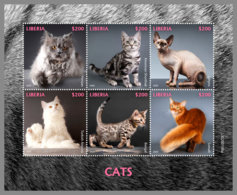 LIBERIA 2020 MNH Cats Katzen Chats M/S - IMPERFORATED - DH2012 - Hauskatzen