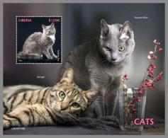 LIBERIA 2020 MNH Cats Katzen Chats S/S - IMPERFORATED - DH2012 - Hauskatzen