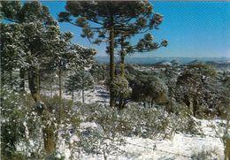 1 AK Brasilien * Winter Bei Caxias Do Sul - Eine Großstadt Im Bundesstaat Rio Grande Do Sul * - Brasilien
