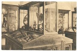 Turnhout - St. Victors-Gesticht - Binnenzicht : Een Hoek Van 't Museum - Turnhout