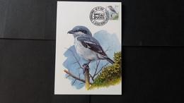 """BUZIN - Carte Oiseaux CM : Numéro 2775 """"Pie-grièche Grise"""" - 1991-2000"""