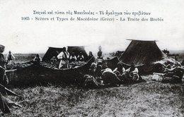 (142) CPA  Macedoine  La Traite Des Brebis  (bon Etat) - Macédoine