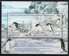 T.A.A.F - Feuille N°638 ** (2012) Manchots - Terres Australes Et Antarctiques Françaises (TAAF)