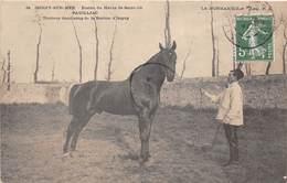 14-ISIGNY-SUR-MER- ETALON DU HARAS DE SAINT-LÔ- PAUILLIAC, TROTTEUR DEMI-SANG DE LA STATION D'ISIGNY - Autres Communes