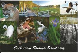 Florida, Naples, Corkscrew Swamp Sanctuary - Reserve Naturelle, Mangrove, Marais, Crocodile, Panthere, Tantale.. - Naples