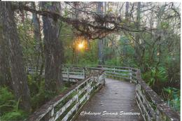 Florida, Naples, Corkscrew Swamp Sanctuary - Reserve Naturelle, Mangrove, Marais, Promenade, Chemin De Bois - Naples
