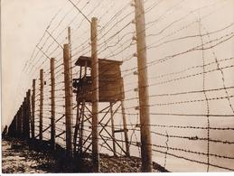PHOTO DE PRESSE ORIGINALE WW2 1942 FRANCE ALSACE LES BARBELES ET LE MIRADOR DU CAMP DE CONCENTRATION DE STRUTHOF - Guerre, Militaire