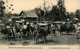 Laos Bull Caravan Caravane De Boeufs Porteurs Carte Postale Missions étrangères De Paris - Laos