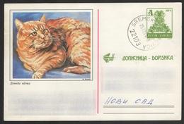 CAT - 1996 Yugoslavia - Stamped STATIONERY - POSTCARD - Used - Bible Book Gospel Initial A - Sremska Mitrovica - Hauskatzen