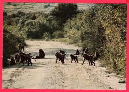 ZAÏRE- Singes - Cynocéphales - SUP*2 SCANS *** - Congo - Kinshasa (ex Zaire)