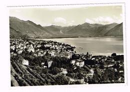 V5119 Locarno - Muralto - Panorama - Lago Maggiore / Viaggiata 1955 - TI Tessin