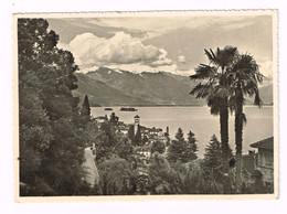 V5121 Brissago - Panorama Col Lago Maggiore / Viaggiata 1956 - TI Tessin