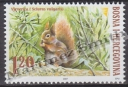 Bosnia Hercegovina - Bosnie 2007 Yvert 558, Wild Fauna, Squirrel - MNH - Bosnia And Herzegovina