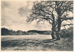 Nederland - 1946 - 5 Op 7,5 Cent Veth, Fotokaart Ommen (Ov) Diluviaal Landschap, Briefkaart G287h - Ongebruikt - Ganzsachen