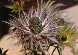 CPSM Chardon Bleu        L2998 - Medicinal Plants