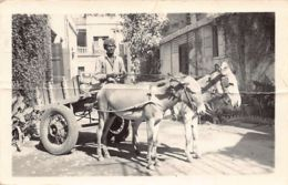 Pakistan - Donkey Cart - R.G.A. Institute - Publ. Unknown. - Pakistan