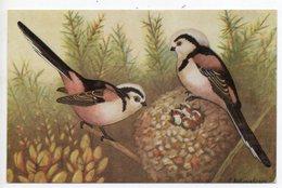 CPA OISEAUX  . LA  MESANGE - Birds