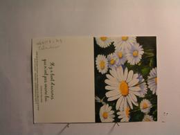 Calendriers > Petit Format : 2013 - Fleurs - Paquerettes - Calendriers