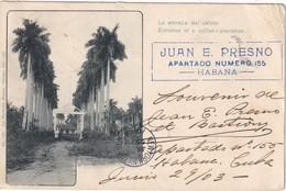 CUBA 1903     CARTE POSTALE DE  LA LA HAVANE  ENTREE DE LA PLANTATION DE CAFE - Cartes Postales
