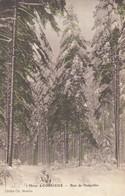 88 - Corcieux - Bois De Hennefête En Hiver - Corcieux