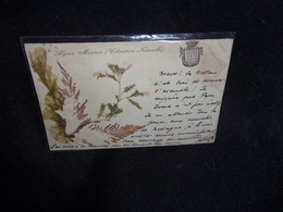 Carte Postale Herbier. Algues Marines .Coloration Naturelle. Avant 1903.Voir 2 Scans. - Timbres