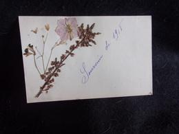 Carte Postale Herbier.Fleurs.Voir 2 Scans. - Timbres