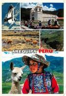 CPSM AREQUIPA - Valle Del Colca - Colca Valley - Alpaga - Canyon  L3005 - Pérou
