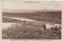 CPA   50  SURTAINVILLE  UN COIN PRES DE LA MARE DES LAGUETTES - France