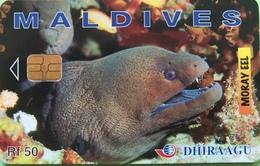 MALDIVES  -  Phonecard  -  DHIRAAGU  -  Murène - Moray  -  Rf 50 - Maldive