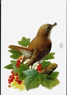 Carte Blanco : Rossignol Philomèle - Nachtegaal - 1985-.. Vogels (Buzin)