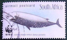 Airmail Fauna Whale Walvis Baleine WWF 1998 Mi 1177 Y&T - Used Gebruikt Oblitere SUD SOUTH AFRICA RSA - Sud Africa (1961-...)