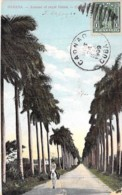CUBA - HABANA La Havane : Avenue Of Royal Palms  - CPA - PALMIERS Palm Trees Palmen Palme Palmeras Palmbomen - Cuba