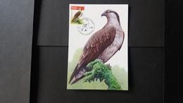 """BUZIN - Carte Oiseaux CM : Numéro 4090 """"Balbuzard Pêcheur"""" - Maximum Cards"""