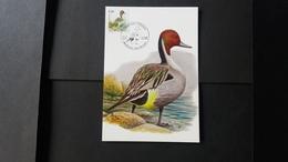 """BUZIN - Carte Oiseaux CM : Numéro 4091 """"Canard Pilet"""" - Maximum Cards"""
