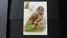 """BUZIN - Carte Oiseaux CM : Numéro 4218 """"Hibou Des Marais"""" - Maximum Cards"""
