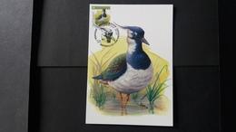 """BUZIN - Carte Oiseaux CM : Numéro 4367 """"Vanneau Huppé"""" - Maximum Cards"""